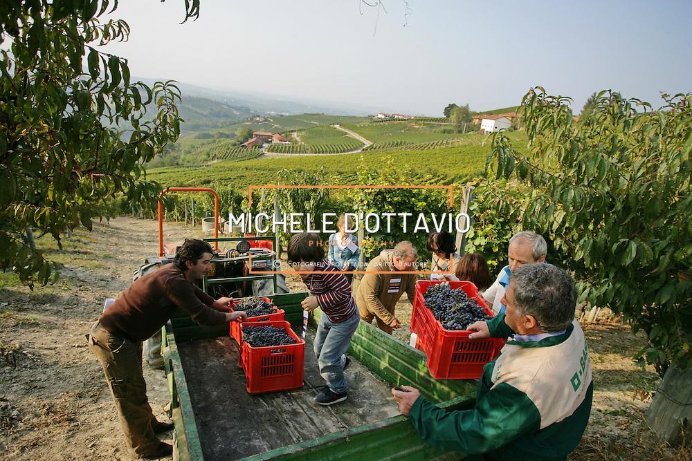 Vendemmia e vigneti delle Langhe nella zona di origine delle uve atte a produrre i vini a denominazione di origine controllata e garantita «Barolo»