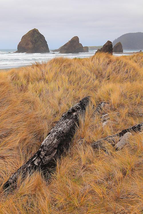 Cape Sebastian South Shoreline - Oregon Coast