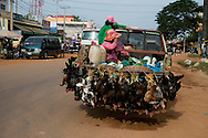 Chickens beeing transported in Siem Reap, Cambodia. PHOTO TIAGO MIRANDA
