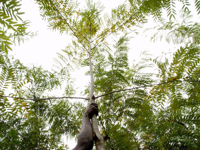 Desarmes, Haiti. 2/5/09 Photo by Ben Depp.