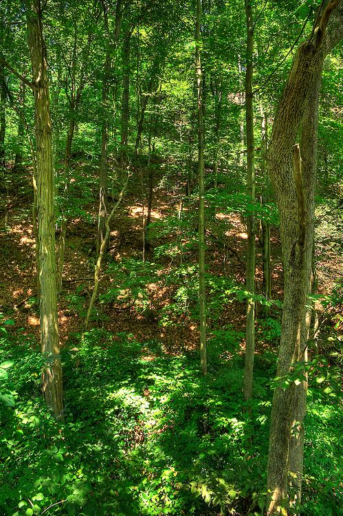 Pennsylvania woods.