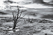 Canary Springs in black & white, Yellowstone National Park