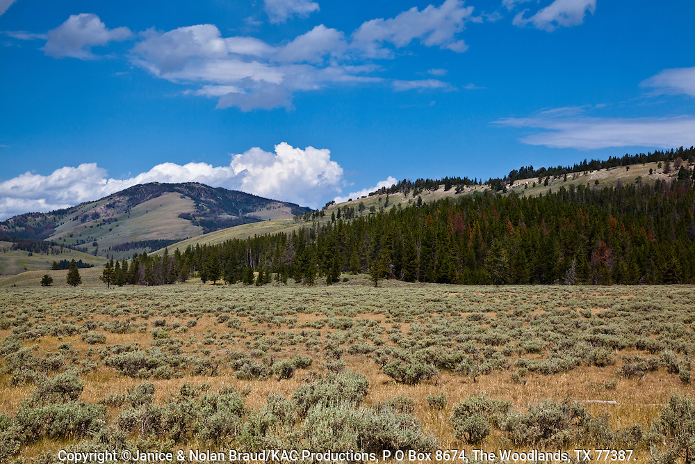 Sagebrush meadow with Gallatin Mountain Range in distance at Yellowstone National Park in Wyoming.