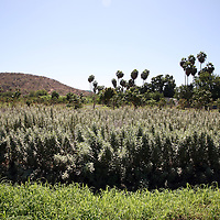 "A visit to the organic farm ""Huerta Los Tamarindos"" in San Jose del Cabo."