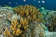 Beautiful Coral Garden, Bali Indonesia