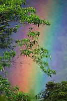 Rainbow in tropical rainforest, Sinharaja Forest Reserve, Sri Lanka