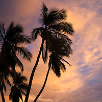 Central America, Nicaragua, San Juan del Sur. Palm trees and sunset sky.