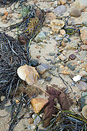 The wrack line is the debris left behind as the tide starts to fall.