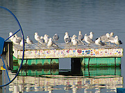 Photo by Leandra Lewis of pigeons resting on a boat dock in Crystal Lake, Illinois.
