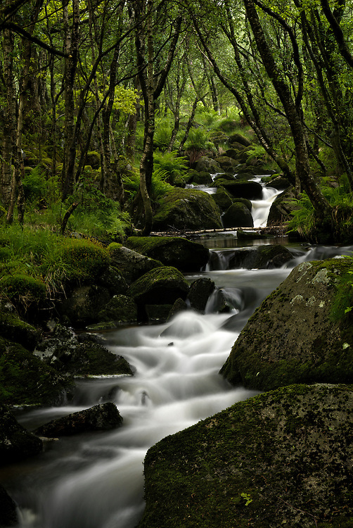 A small forest creek, Rogaland, Norway.