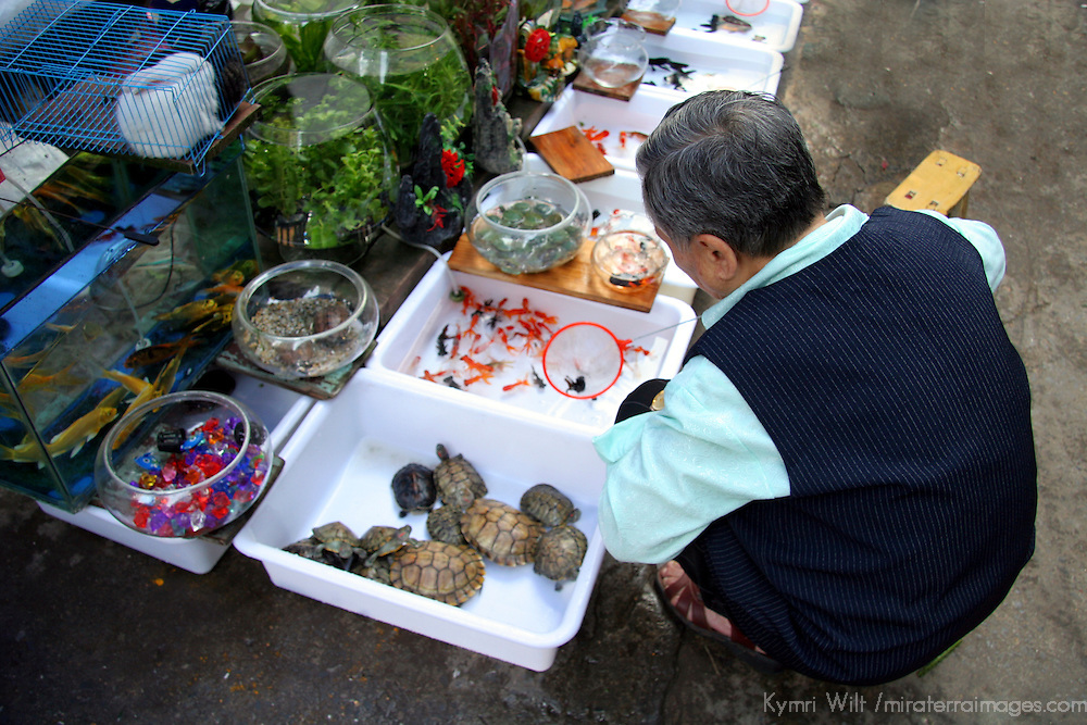 Asia, China, Chongqing. Local street market vendor and aquatic pets in the city of Chongqing.