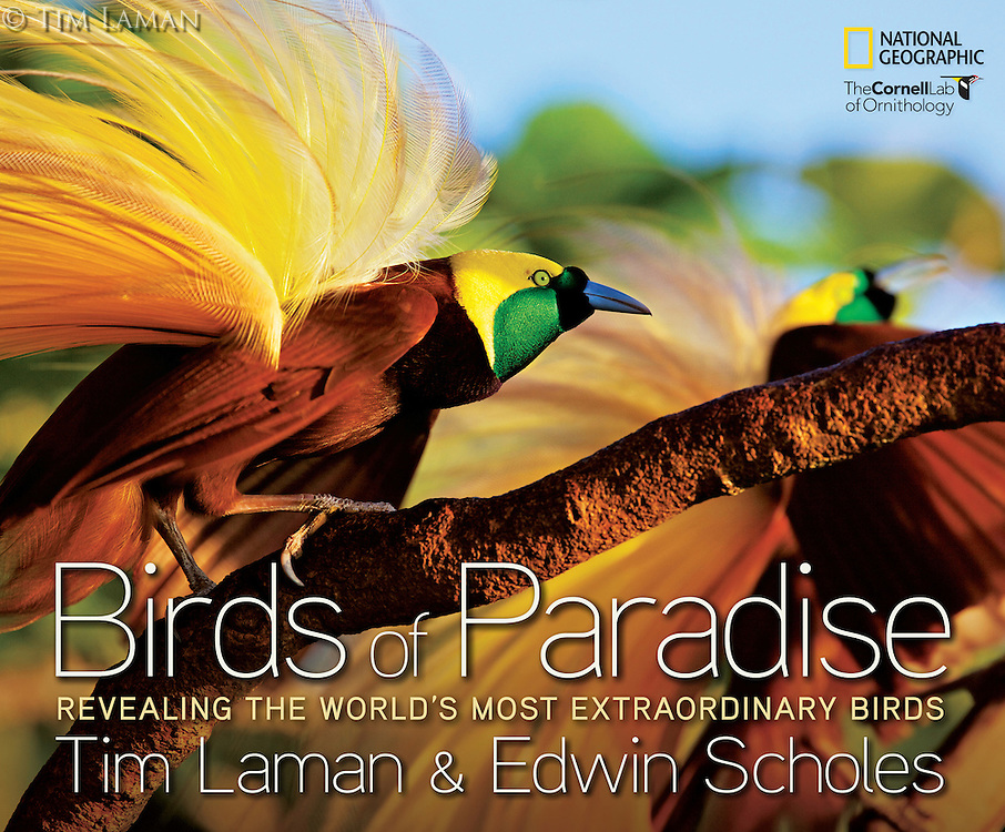 It has been eight years in the making, but Tim's book, with collaborator Edwin Scholes, BIRDS OF PARADISE: REVEALING THE WORLD'S MOST EXTRAORDINARY BIRDS is finally for sale.  This is the only place you can purchase a book signed by Tim Laman.