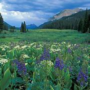 Gothic Mountain, Crested Butte, Colorado
