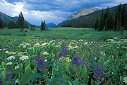 Gothic Mountain, Crested Butte, Colorado