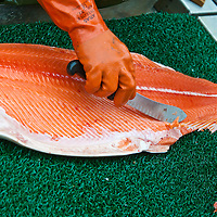 A fisherman fillets one of his Copper River king salmon to prepare it for eating. The rich, red meat has some of the highest natural Omega 3 oils of any salmon.