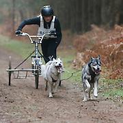2 Dog + Sams + Mals