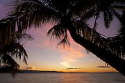 Coconut palm trees and ocean at sunset; Matangi Private Island Resort, Fiji