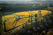 Aerial view over Le Cadeau Vineyard, Chehalem Mountain AVA, Willamette Valley, Oregon