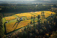 Aerial view over Le Cadeau Vineyard, Chehalem Mountain AVA, Willamette Valley, Oregon