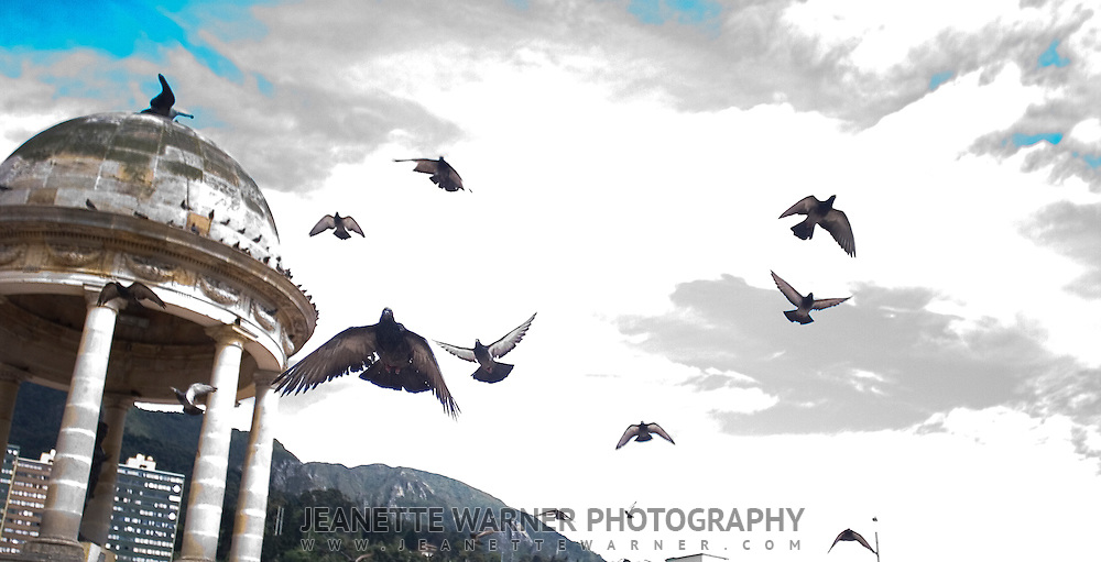 Pigeons taking off in Bogota, Colombia.