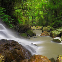 Kondalilla Falls National Park is situated in the hinterland of the Sunshine Coast and home to the impressive Kondalilla Falls.<br /> Kondalilla is the aboriginal name meaning 'rushing waters'.