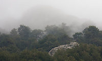 Mist covering a pine forest on a mountainside, Cazorla National Park, Jaen Province, Andalucia, Spain