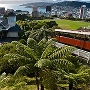 Wellington cable car, tree fern, New Zealand, North Island