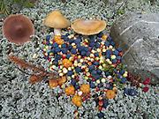 Berries in Denali National Park