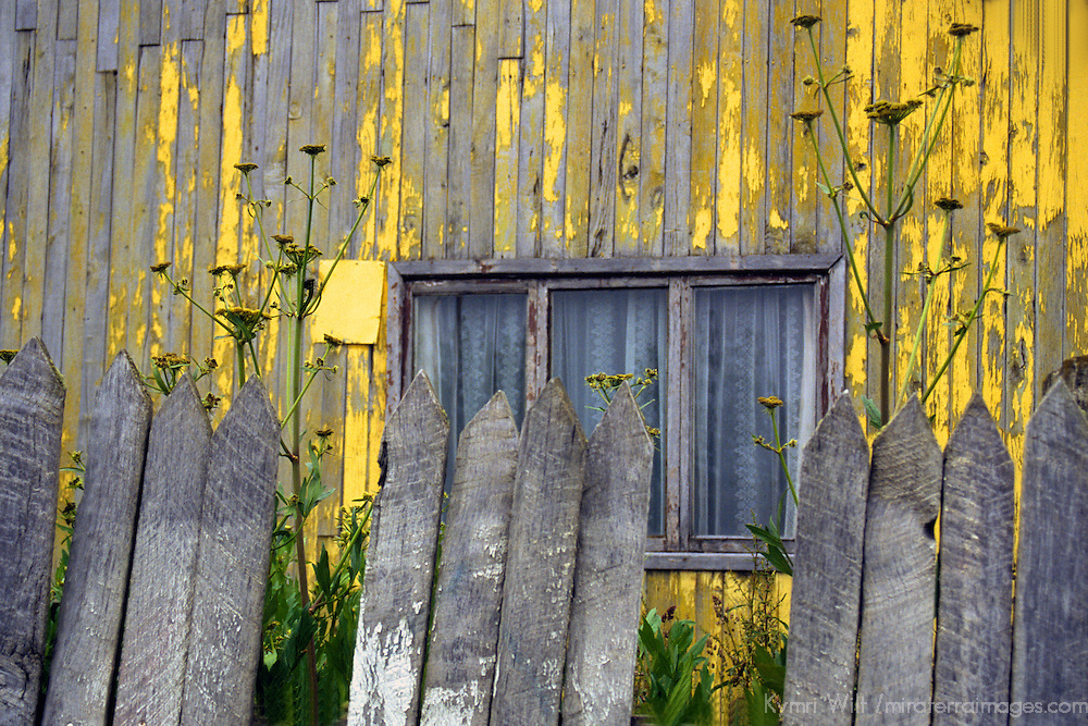 Americas, South America, Chile, Puerto Natales. A rustic building and fence being overgrown with wildflowers.