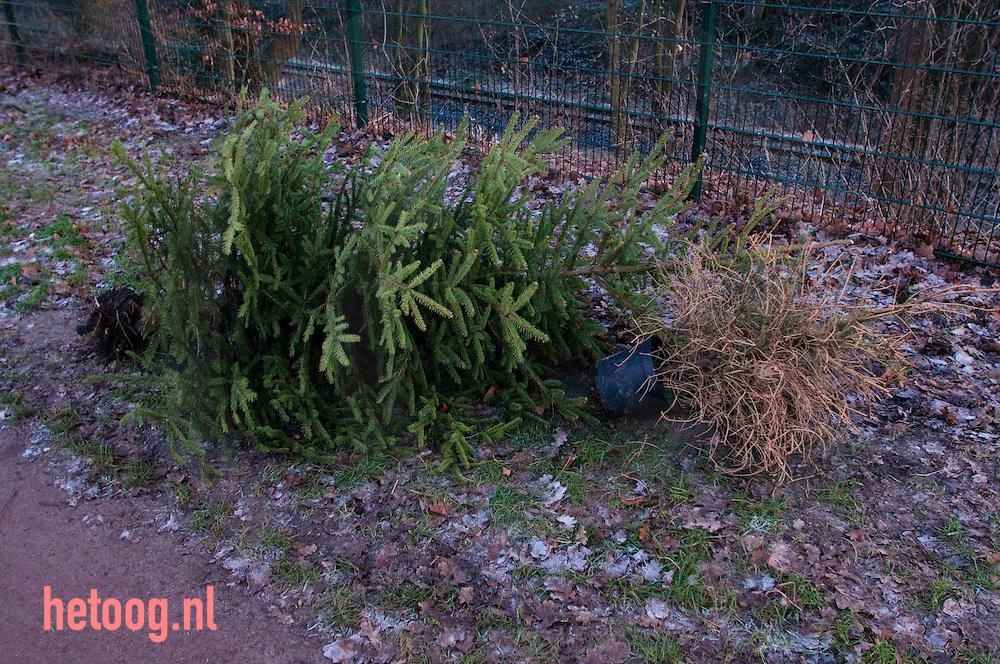 uit huis verwijderde kerstbomen die langs de straat zijn gelegd. één groene met naalden en één dorre zonder.