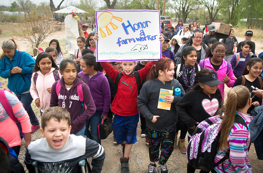 """mkb0323117b/metro/Marla Brose --  Holding a sign, Phoenix Simmons, a 4th grader from Kirkland Elementary, marches and chants, """"Si se puede"""" with classmate and about 350 grade school students who learned about farming and the migrant farm workers' movement at La Plazita Gardens at Sanchez Farm Open Space in Albuquerque's South Valley. This was the 8th annual Dolores Huerta Day of Service and Learning. (Marla Brose/Albuquerque Journal)"""