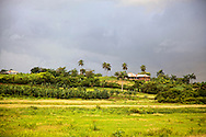 Bananas, palm trees, and houses on a small hill near Antilla, Holguin Province, Cuba.
