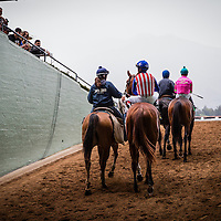 February 07 2015: Dortmund with jockey Martin Garcia up walk to the track for The GII Robert Lewis Stakes at Santa Anita Park in Arcadia CA. Alex Evers/ESW/CSM`