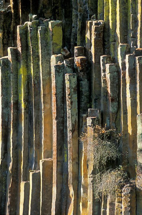 Basalt Stone Umpqua National Forest : Greg vaughn photography