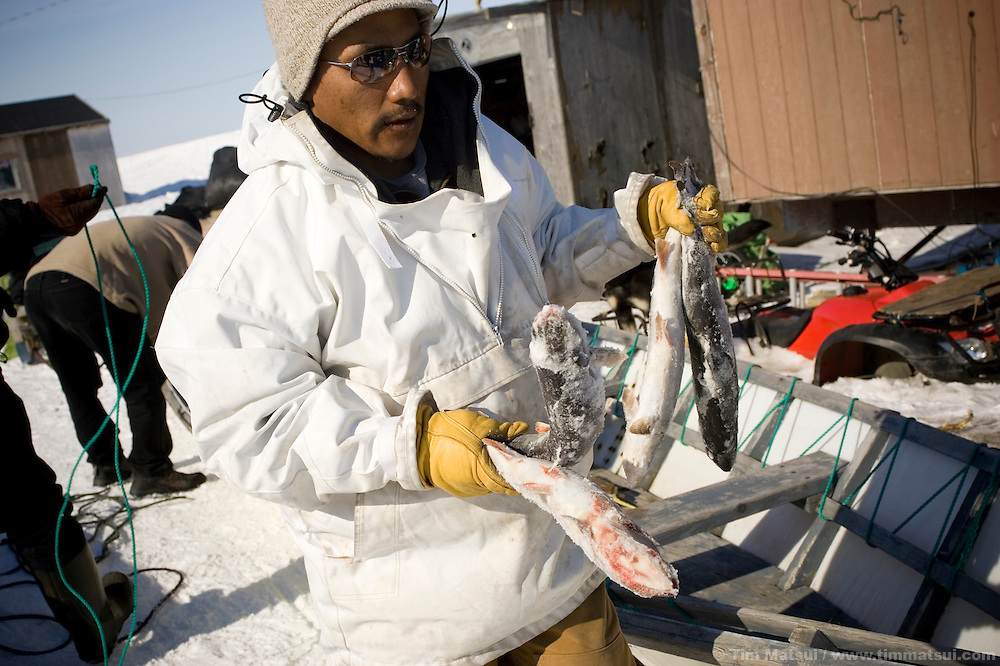 May 2, 2008 -- Kivalina, AK, U.S.A..Terry Baldwin prepares to head out on the pack ice for whale hunting in the native village of Kivalina, Alaska. Kivalina is suing 20 oil companies for property damage related to global warming; the ocean pack ice forms later and melts earlier, leaving the town vulnerable to erosive winter storms and endangering their traditional subsistence lifestyle. (Photo by Tim Matsui)