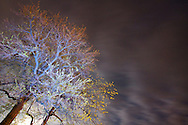 Small green buds have appeared on this tree in early spring. It was lit with a blue gelled flash as storm clouds approached under a full moon.