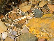 Underwater Scene (Treble hooks on the river bottom)<br /> <br /> Bryce Gibson/Engbretson Underwater Photography