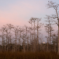 The full moon sets in the Big Cypress National Preserve