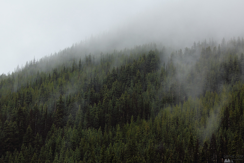 Fog lifts from trees in Banff National Park, Alberta, Canada