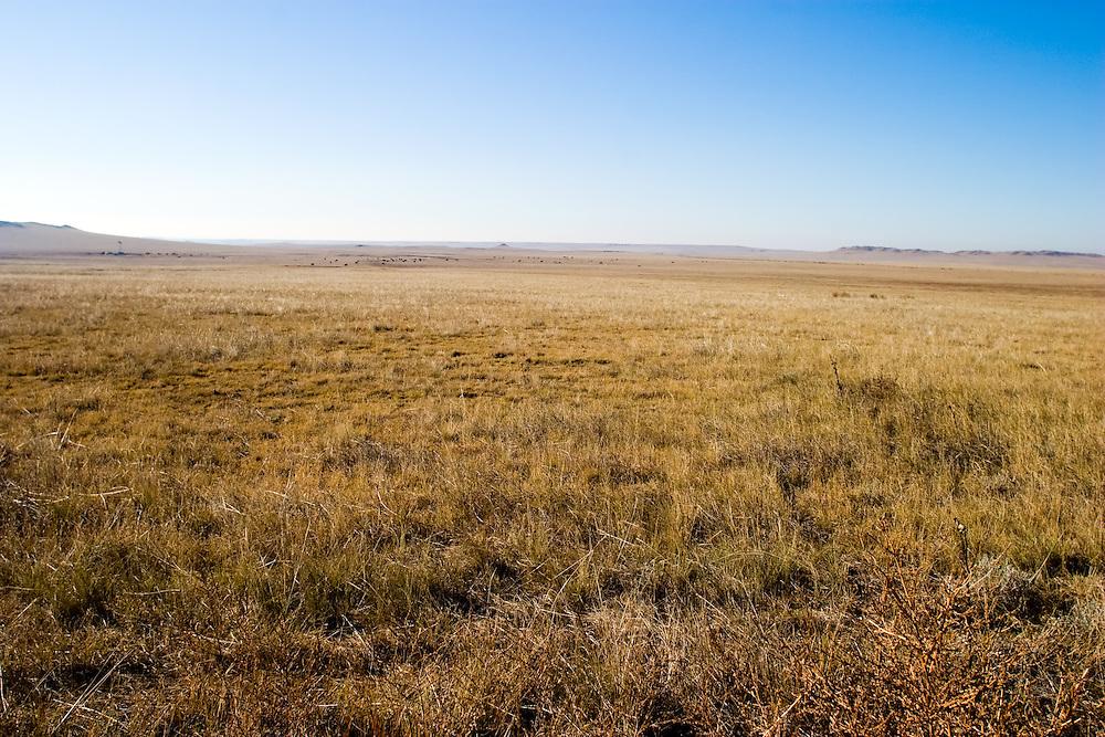 The tall prairie grass has dried to a brown hue on the flat plains of eastern Colorado, near the Nebraska border.