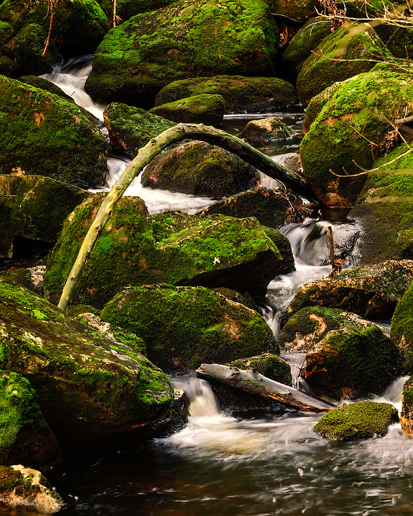 A small woodland stream at Furelunden, Vest Agder, Norway.