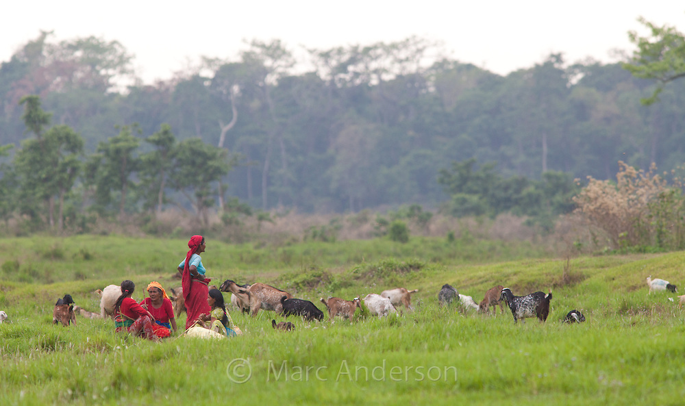 Nepalese women looking after their goats, Chitwan National Park