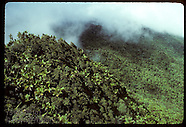 PUERTO RICO 15101: BOTANICAL TRIP