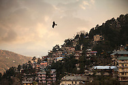 A bird soars over McLeodGanj, The Dalai Lama's residence and the headquarters of Central Tibetan Administration (the Tibetan government in exile) in Dharamshala, India.