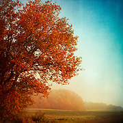 Maple tree in autumnal morning light. Textured photography.<br />