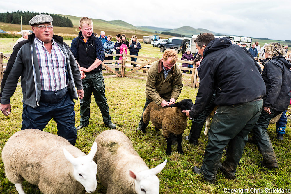 Pennymuir, Jedburgh, Scottish Borders, UK. 3rd September 2016. Farmers from the Scottish Borders and Northumberland gather at Pennymuir in the Cheviot Hills for the annual Upper Kalewater Show. Sheep farming is integral to the landscape and economy of the area.