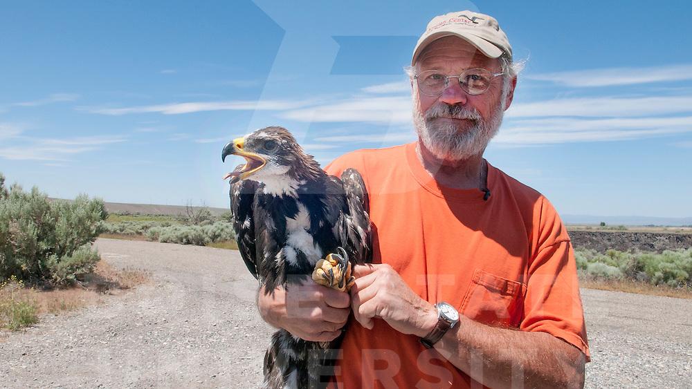 Golden Eagle nest, Dr. Marc Bechard, Raptor Research, John Kelly photo