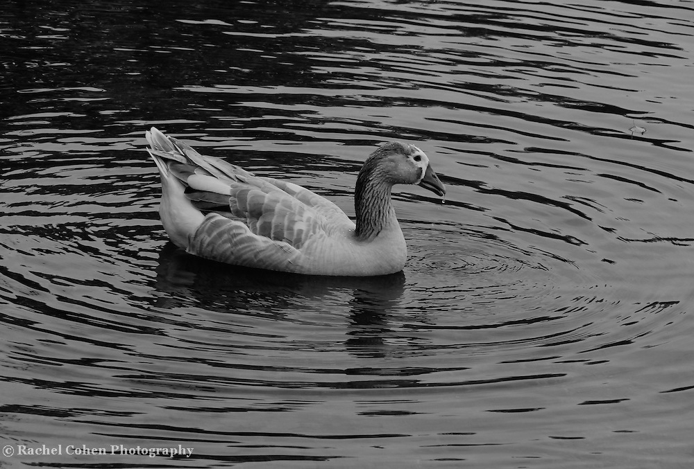 &quot;Dappled and Dripping&quot; B&amp;W<br />