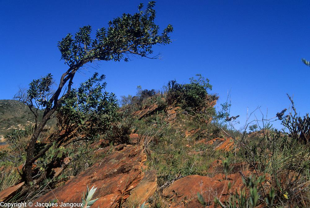 Saxicolous vegetaton (growing among rocks) on rock outcrop in Serra do Espinhaco Mountain Range, Minas Gerais State, Brazil