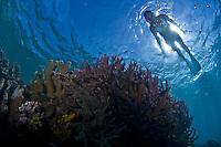 Yap, Micronesia, Grey Reef Sharks at Vertigo Reef, Free Diver Ai Futaki modeling